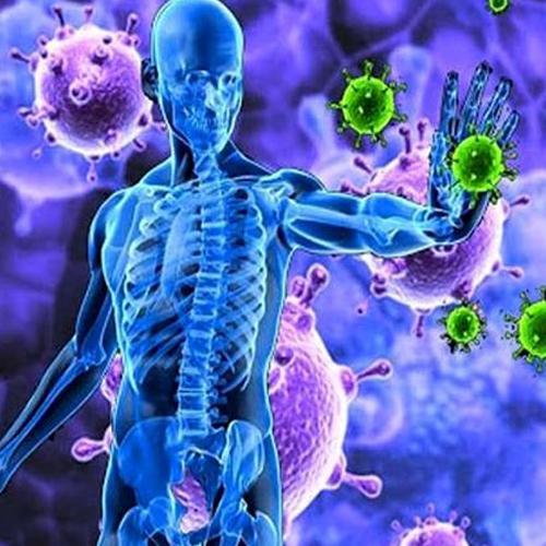 نقش ژل رویال در تقویت سیستم ایمنی