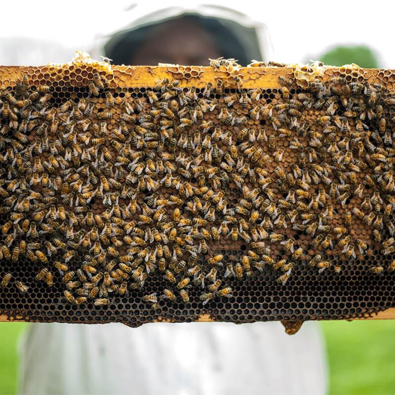 خواص عسل وحشی